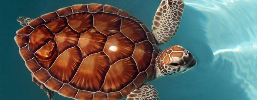 Центр восстановления морской флоры и фауны (ферма черепах)