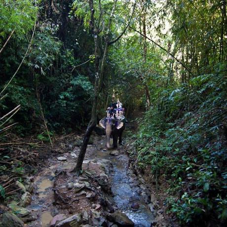 Самые незабываемые экскурсии на Пхукете от компании с многолетним опытом Slon Travel