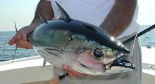 Экскурсия морская рыбалка на Пхукете