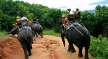 Экскурсия катание на слонах на Пхукете