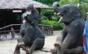 Превью - Остров Джеймса Бонда плюс катание на слонах