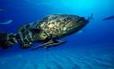 Превью - Ночная морская рыбалка на специальном катере