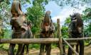 Превью - Экскурсия в Национальный парк Као Сок Люкс