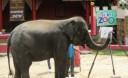 Превью - Зоопарк на Пхукете