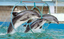 Превью - Дельфинарий на Пхукете