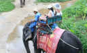 Превью - Экскурсия рафтинг на материке и катание на слонах на Пхукете