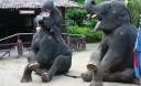 Превью - Рафтинг на материке, квадроциклы и катание на слонах