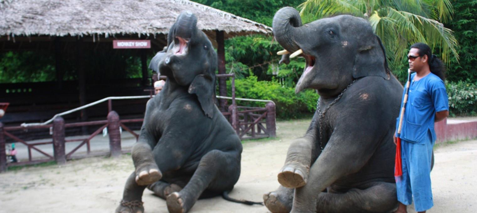 Остров Джеймса Бонда плюс катание на слонах