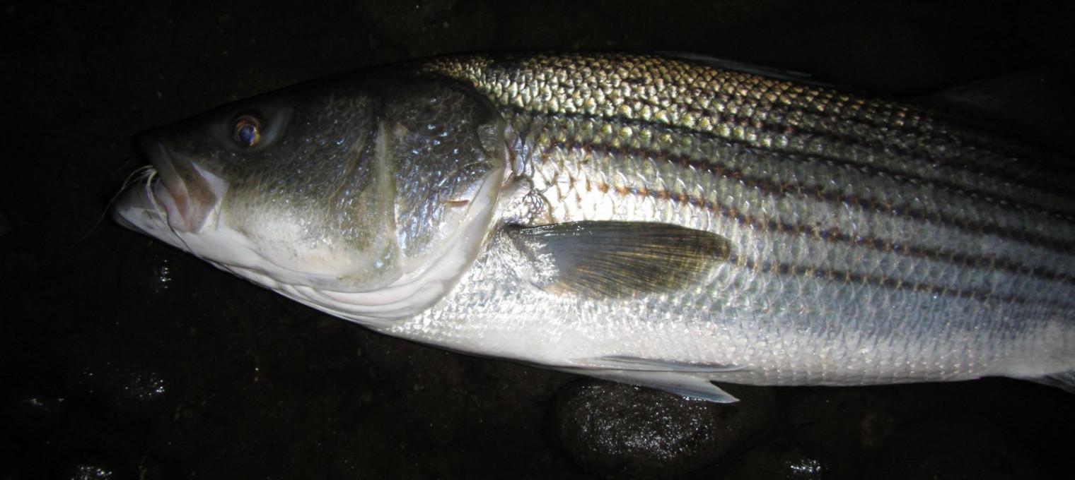 Ночная рыбалка на Пхукете