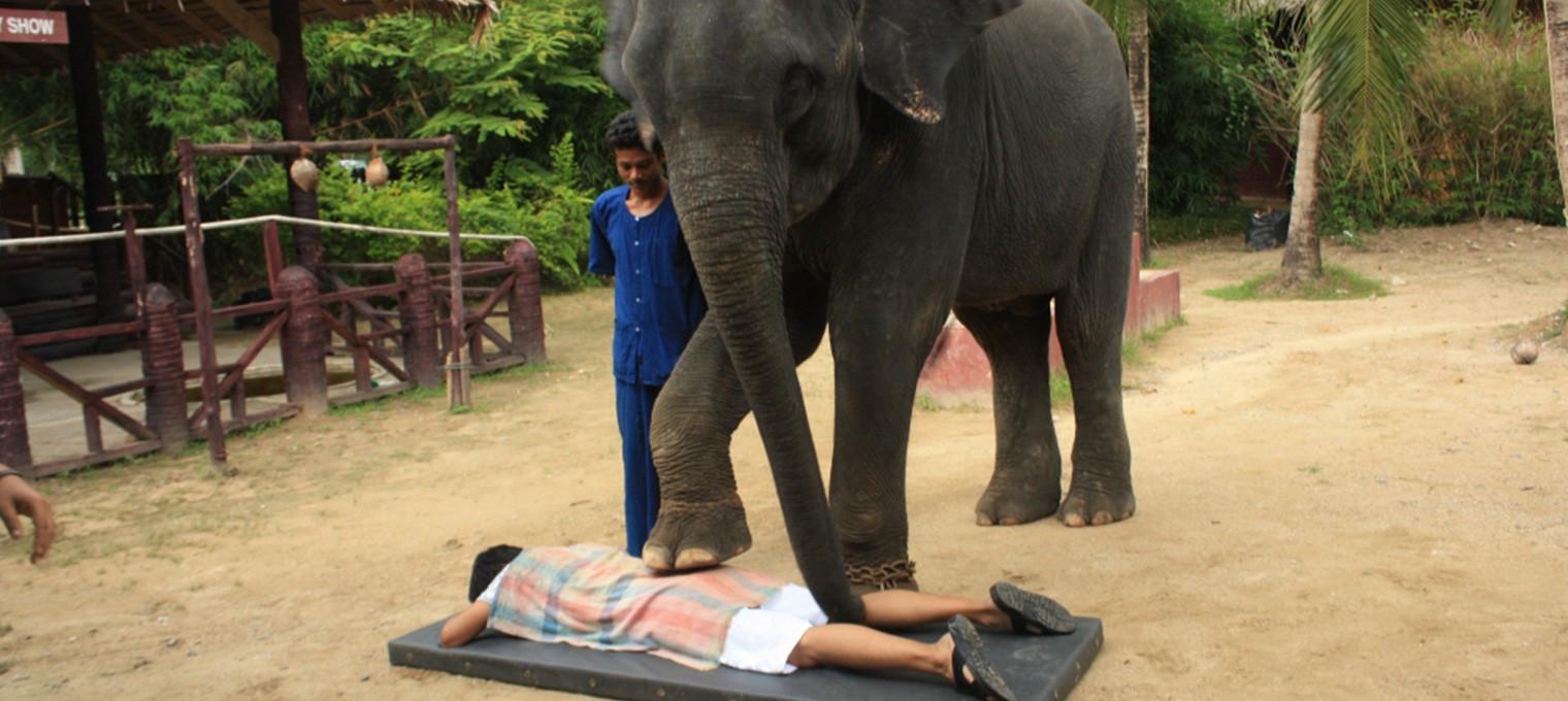 Рафтинг на материке и катание на слонах на Пхукете
