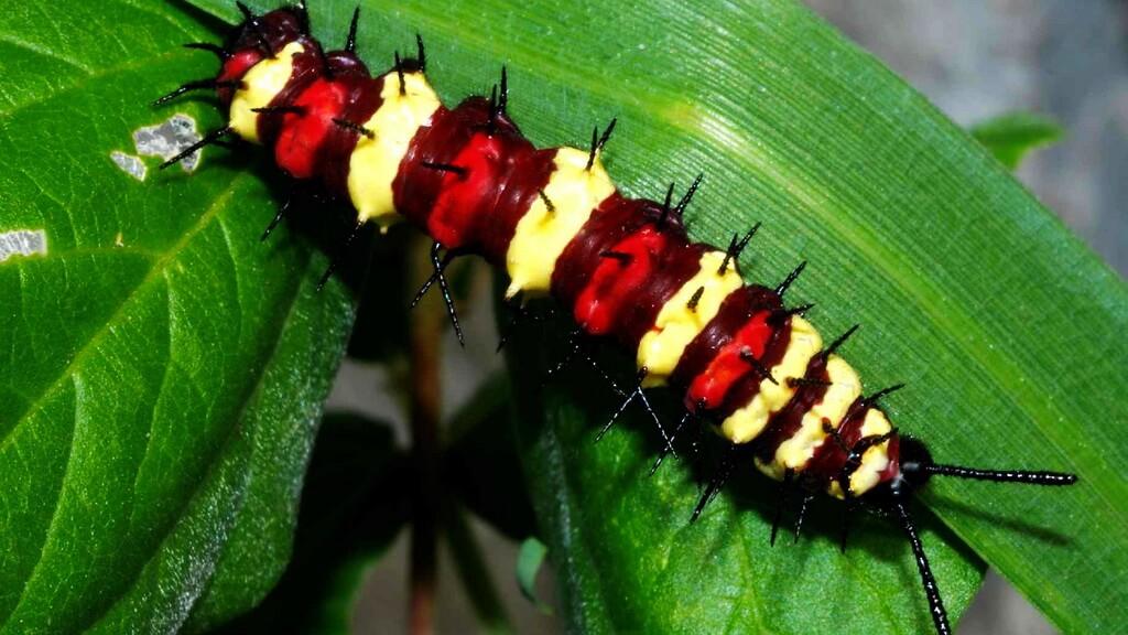 Каких насекомых и животных стоит опасаться на Пхукете в 2020 году?